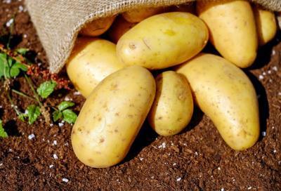 Le patate? Per i ciclisti sono ok